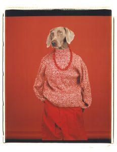 WILLIAM WEGMAN | La gossa Candy, fotografiada amb el títol Casual el 2002 i que és la imatge dels Rencontres d'Arles 2018 (Sperone Westwater Gallery)