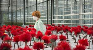 ARCHIVO | Una falsa felicidad de la biotecnología en Little Joe, de Jessica Haussner