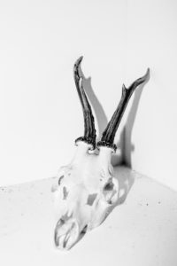 LAIA ABRIL | Un crani de cérvol amb les seves banyes, com a exemple de la fórmula Shrinky d'ungüent segons la qual la dona pot simular ser verge fent més estreta la seva vagina
