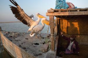 SARAH CARON/LE FIGARO MAGAZINE | Le peuple pakistanais en danger des Mohana, au lac Manchar, domestique les oiseaux parce qu'eux les aident à pêcher
