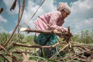 CHLOÉ SHARROCK | Une femme attachant les cannes à sucre coupées à Belgaum, État indien de Karnataka, dans un travail très physique