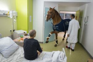 JÉRÉMY LEMPIN/DIVERGENCE | Fotografia de la sèrie <em>Doctor Peyo i Mister Hansen</em>, on un cavall autista però hipersensible s'acomiada dels pacients terminals de càncer que ell mateix escolleix en un hospital de Calais, al nord de França
